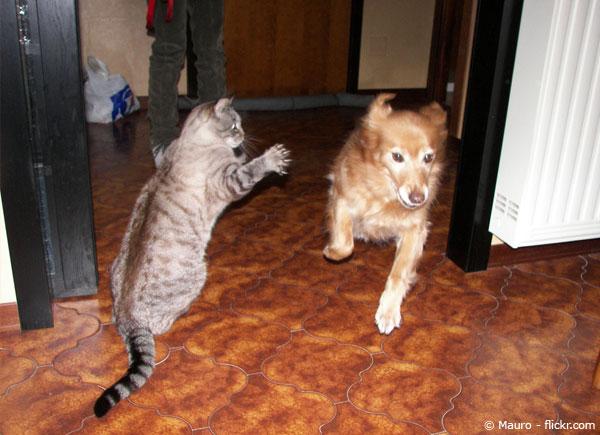 Katze greift Hund an